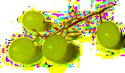 Wein Online Blog