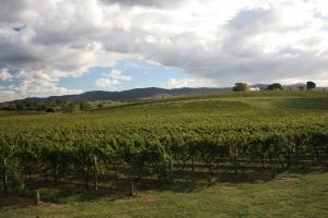 Weinanbaufläche