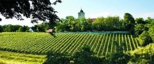 Weingut Schloss Schönborn